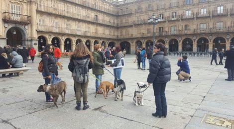 ESTREPITOSO FRACASO DEL ANIMALISMO EN SU LLAMADA CONTRA LA CAZA