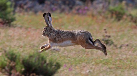 La Oficina Nacional de la Caza reclama que la nueva PAC incluya medidasque la hagan compatible con larecuperación de la fauna menor
