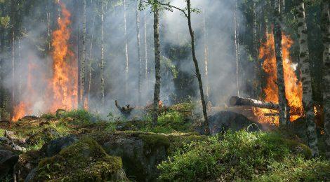La Federación Galega de Caza llama a las sociedades y cazadores gallegos a actuar con solidaridad ante los incendios